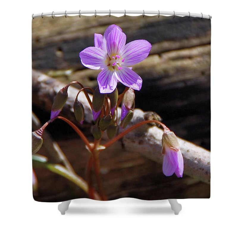 Flowers Shower Curtain featuring the photograph Arms Widespread 1203 by Guy Whiteley