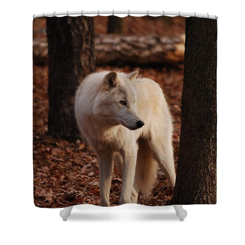 Wolf Shower Curtain featuring the photograph Artic Wolf by Lori Tambakis