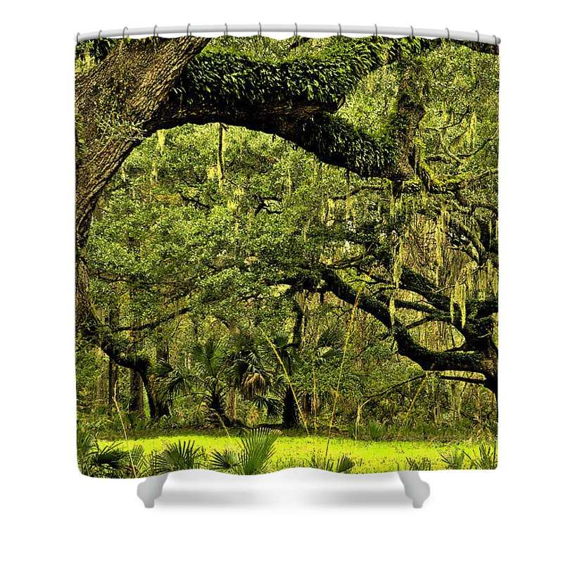 Tree Shower Curtain featuring the photograph Artistic Live Oaks by Phill Doherty