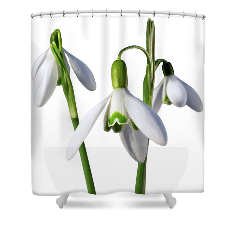 Snowdrop Shower Curtain featuring the photograph Spring Springs Eternal by Jon Delorme