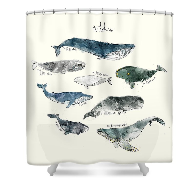 Whales Shower Curtain Featuring The Painting By Amy Hamilton