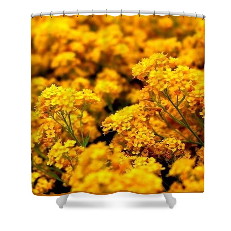 Flowers Shower Curtain featuring the photograph Flowers by Bijna Balan