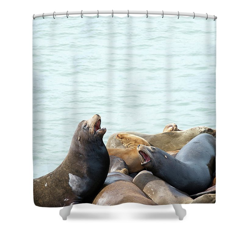 Sea Shower Curtain featuring the photograph Boisterous Pinnipeds by Sheila Fitzgerald