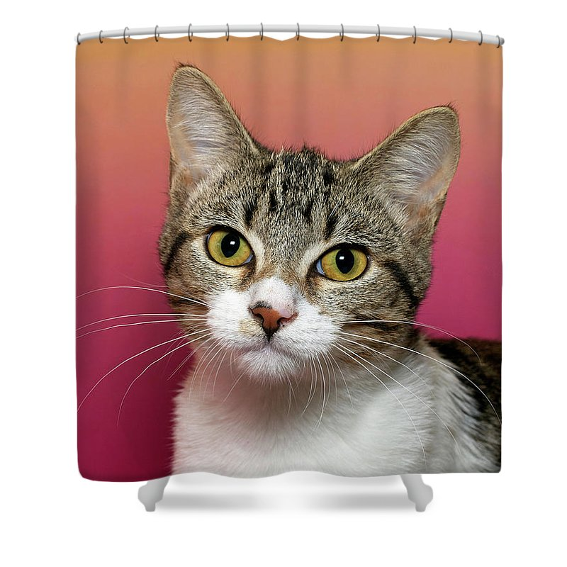 Adorable Shower Curtain featuring the photograph Life Is Better With A Cat by Sheila Fitzgerald