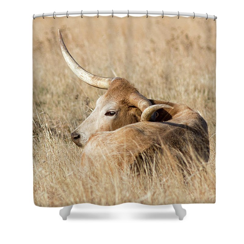 2017 April Shower Curtain featuring the photograph Prairie Longhorn by Bill Kesler