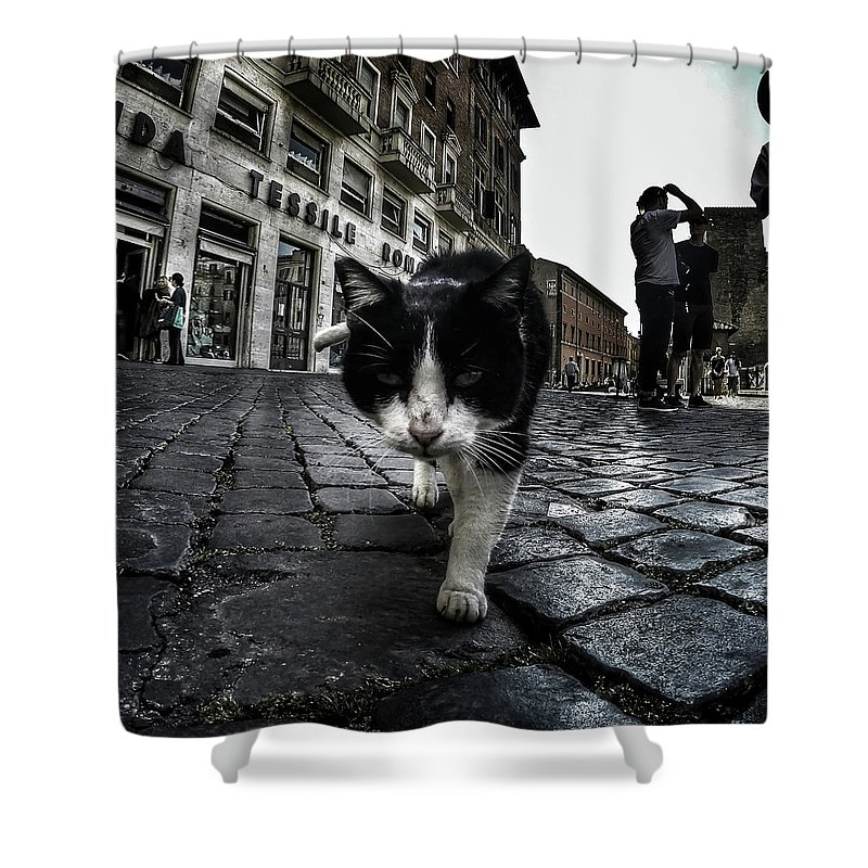 Cat Shower Curtain featuring the photograph Street Cat by Nicklas Gustafsson
