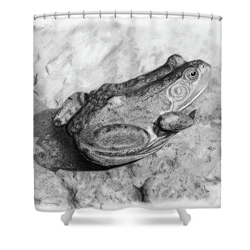Frog Shower Curtain featuring the drawing Frog On Rock by Sarah Batalka