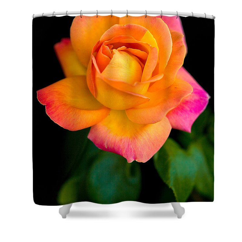 Rose Shower Curtain featuring the photograph Arundel Rose by Chris Lord