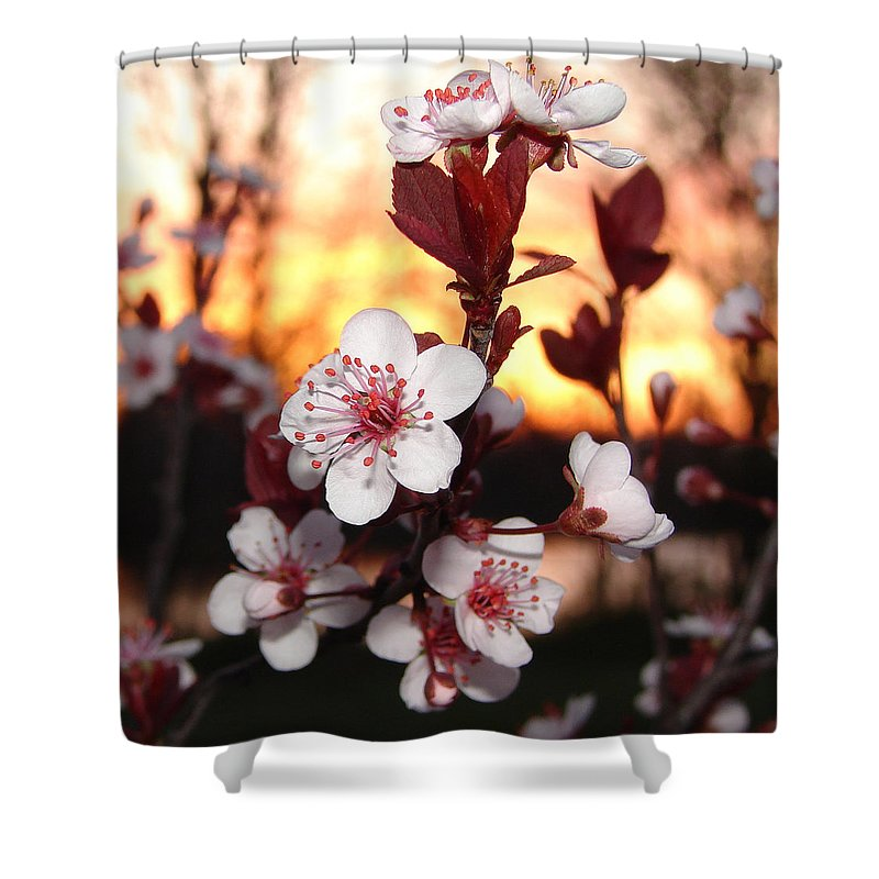Shower Curtain featuring the photograph As The Sun Sets by Luciana Seymour