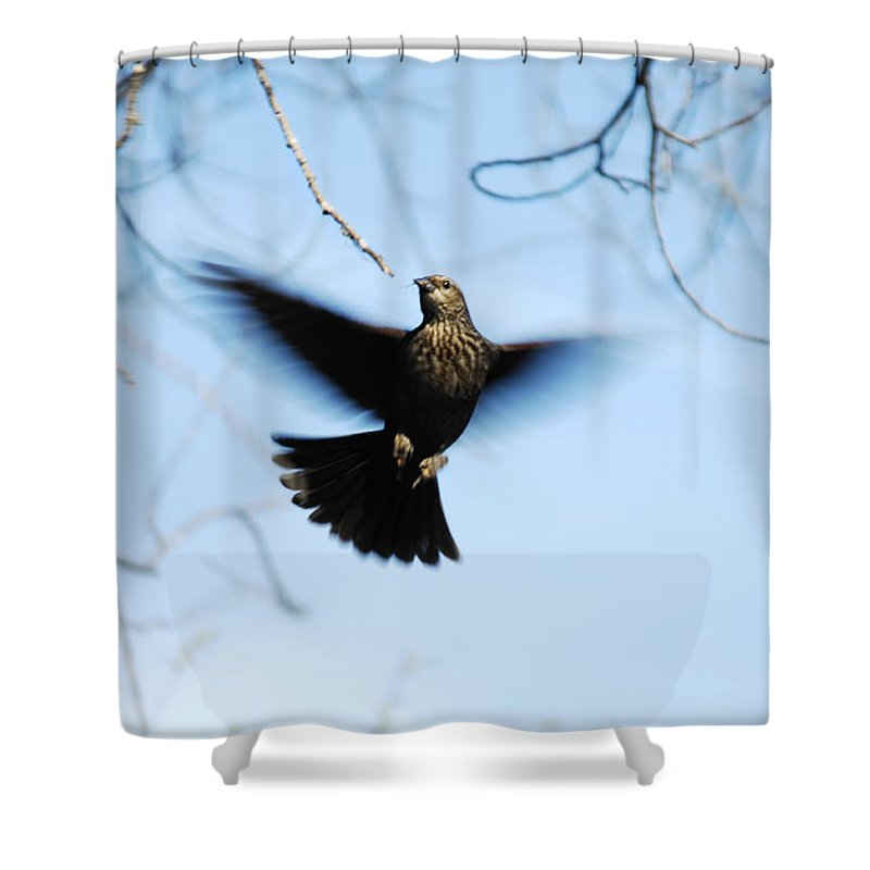Bird Shower Curtain featuring the photograph Ascension by Donna Blackhall