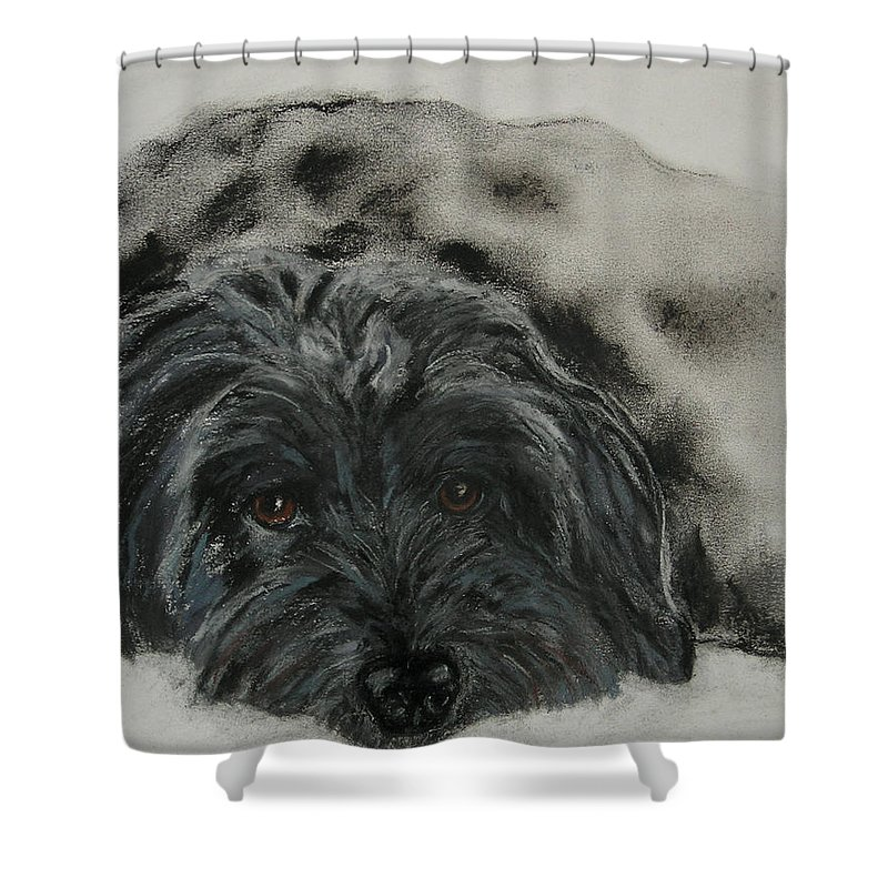 Dog Shower Curtain featuring the drawing Asia by Cori Solomon