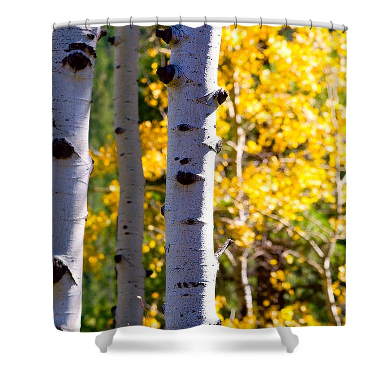 Aspens Shower Curtain featuring the photograph Aspen Color by James BO Insogna