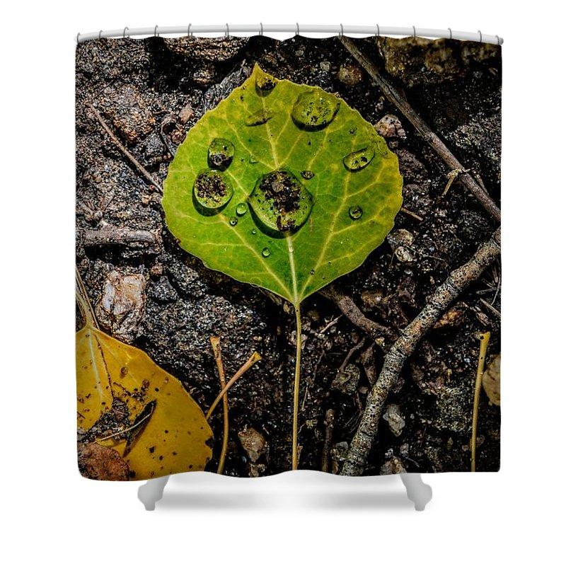 Aspen Leaf Shower Curtain featuring the photograph Aspen Dew by Michael Brungardt