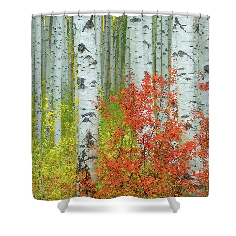 Usa Shower Curtain featuring the photograph Aspen Glow by Christian Heeb