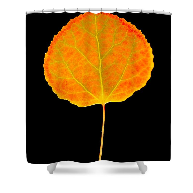 Leaf Shower Curtain featuring the photograph Aspen Leaf by Marilyn Hunt