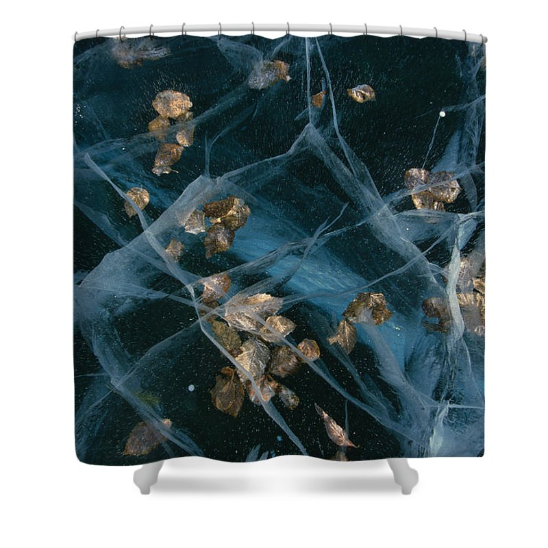 Nobody Shower Curtain featuring the photograph Aspen Leaves Frozen In Lake by Michael S. Quinton