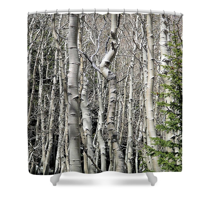 Great Basin Np Shower Curtain featuring the photograph Aspen Stand by Rich Bodane