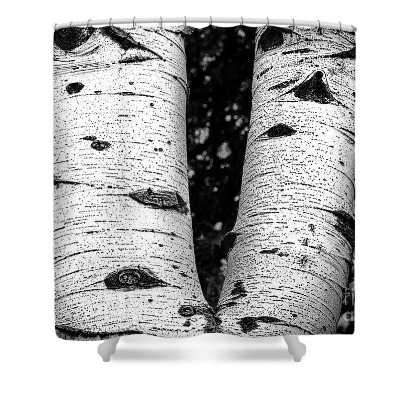Aspen Tree Art Shower Curtain featuring the photograph Aspen Tree Art by David Millenheft
