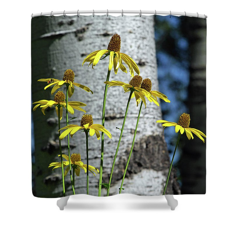 Wildflower Shower Curtain featuring the photograph Aspens And Arnicas by Linda Weyers