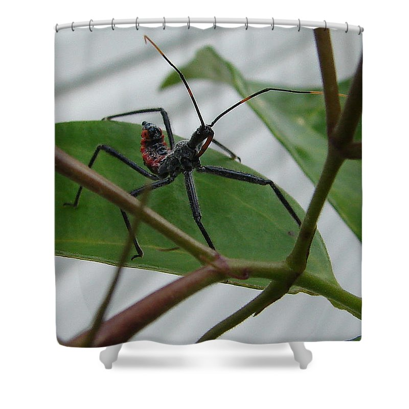 Insect Red Black Green Leaf Shower Curtain featuring the photograph Assassin Bug by Luciana Seymour