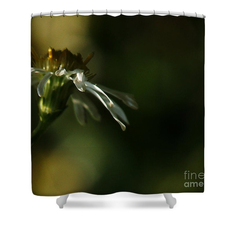 Flower Shower Curtain featuring the photograph Aster's Peripheral Ray by Linda Shafer