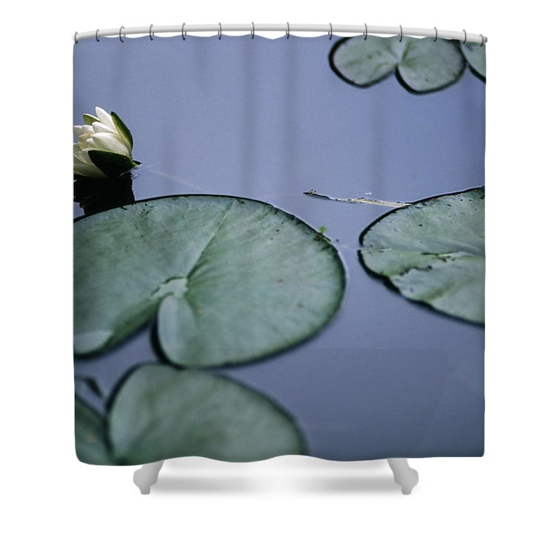 Impressionism Photos Shower Curtain featuring the photograph At Claude Monet's Water Garden 2 by Dubi Roman