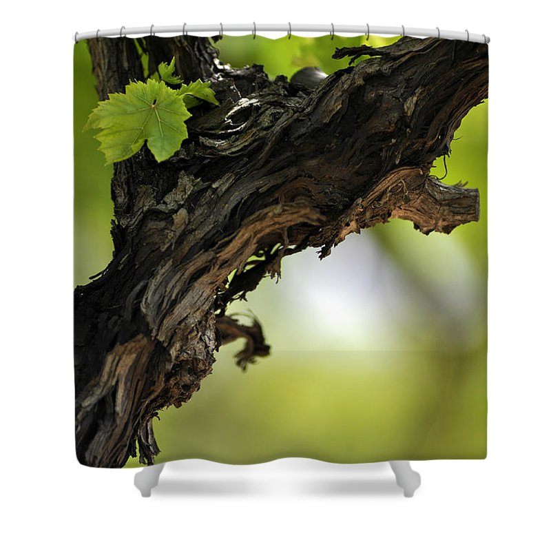 At Lachish Vineyard Shower Curtain featuring the photograph At Lachish Vineyard by Dubi Roman