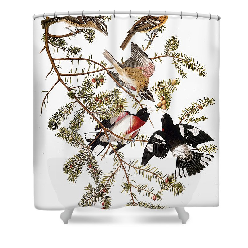 1838 Shower Curtain featuring the photograph Audubon: Grosbeak by Granger