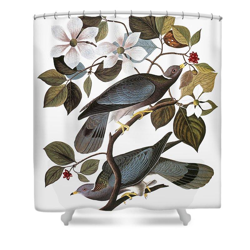 1838 Shower Curtain featuring the photograph Audubon: Pigeon by Granger