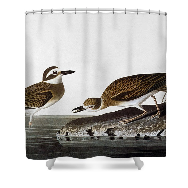 1827 Shower Curtain featuring the photograph Audubon: Plover, 1827-38 by Granger