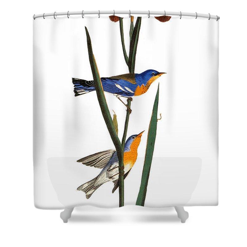 1827 Shower Curtain featuring the photograph Audubon: Warbler, 1827 by Granger