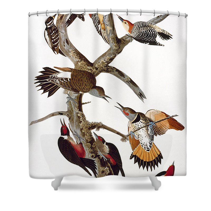 1838 Shower Curtain featuring the photograph Audubon: Woodpeckers by Granger