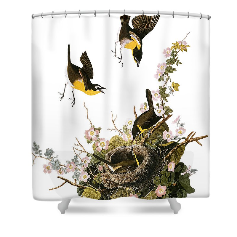 1827 Shower Curtain featuring the photograph Audubon: Yellow Chat, (1827-38) by Granger