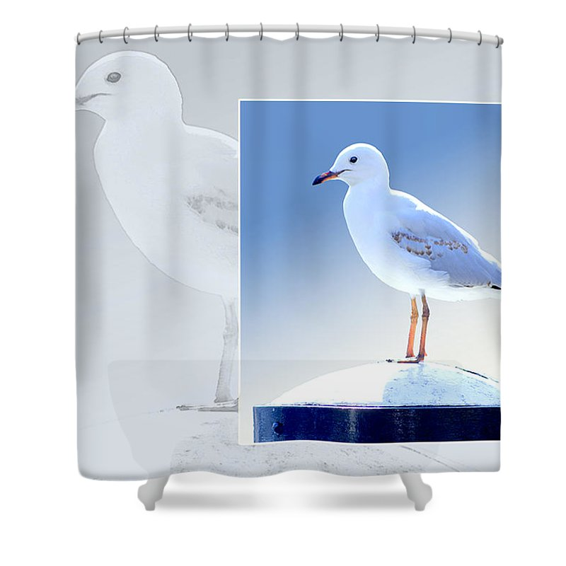 Animal Shower Curtain featuring the photograph Australian Wildlife - Silver Gull by Holly Kempe