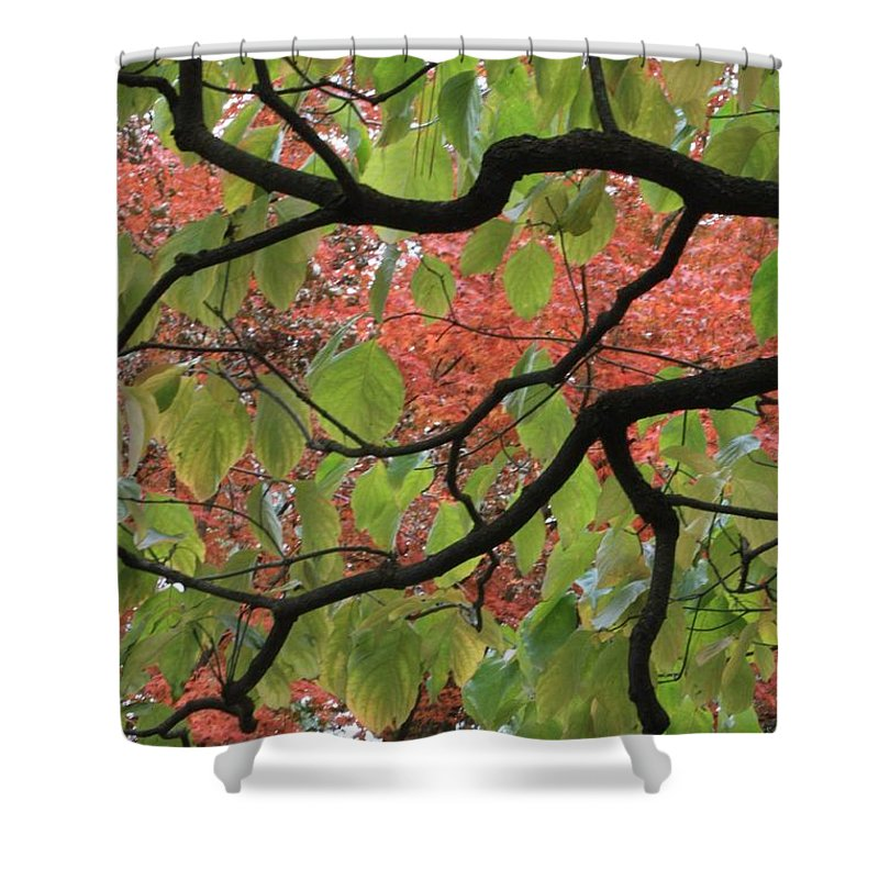 Fall Shower Curtain featuring the photograph Autumn 7 by Carol Groenen
