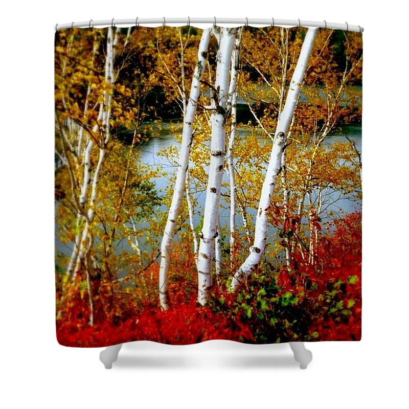Autumn Shower Curtain featuring the photograph Autumn Birch Lake View by Patricia L Davidson