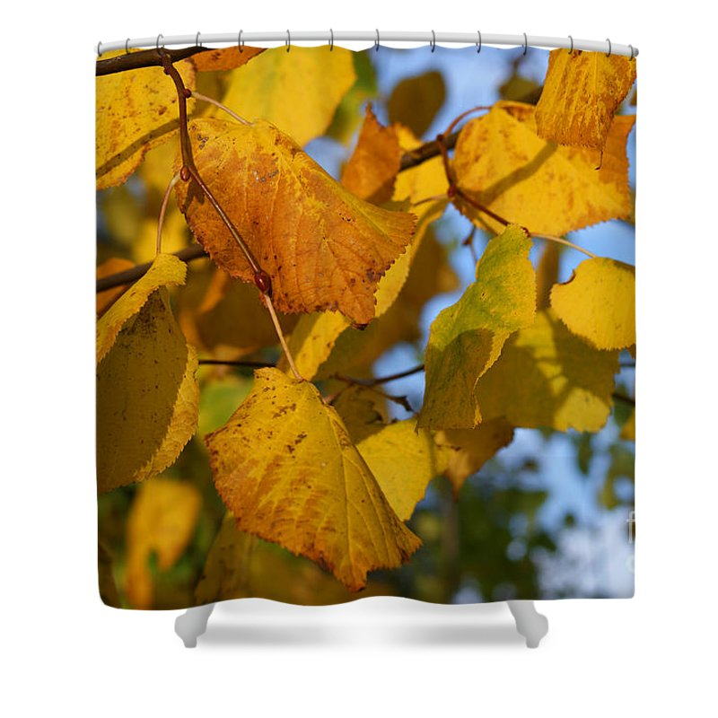Autumn Shower Curtain featuring the photograph Autumn by Carol Lynch