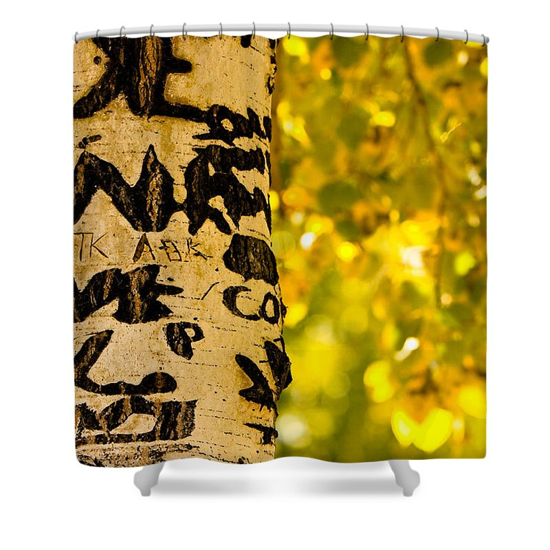 Aspens Shower Curtain featuring the photograph Autumn Carvings by James BO Insogna