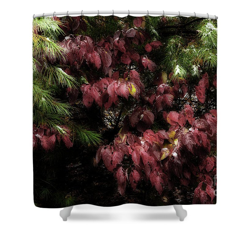 Red Leaves Shower Curtain featuring the photograph Autumn Chill by Michael Eingle