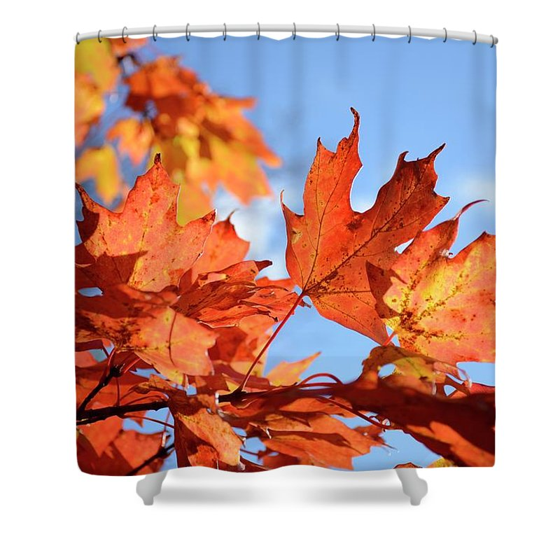 Autumn Shower Curtain featuring the photograph Autumn Colors 2 by Angie Tirado