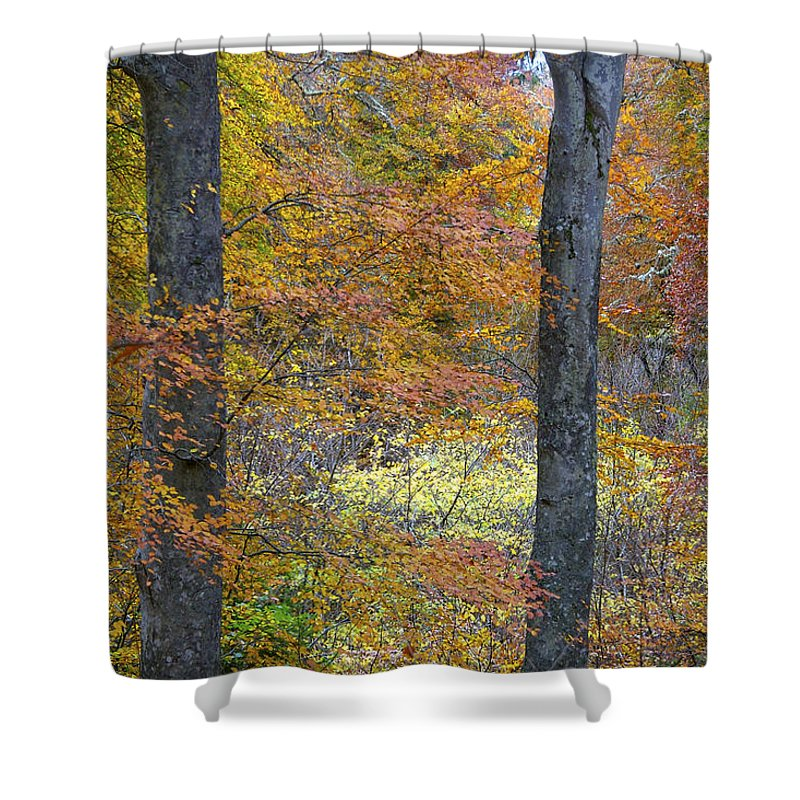 Fall Shower Curtain featuring the photograph Autumn Colours by Phil Crean