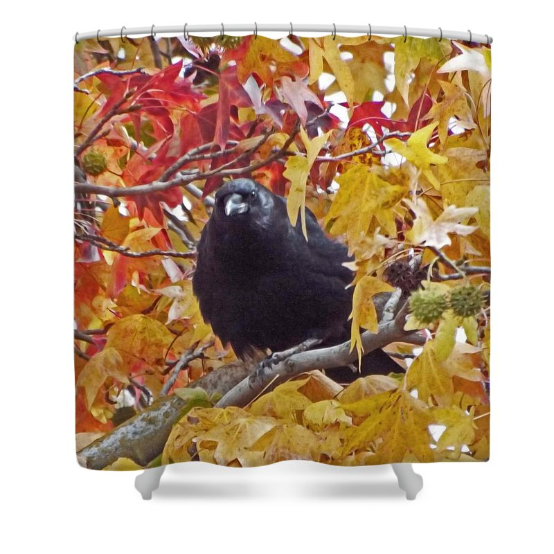 Crow Shower Curtain featuring the photograph Autumn Crow by KaFra Art
