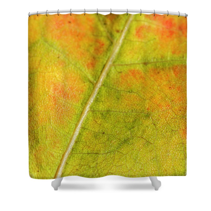 Fall Shower Curtain featuring the photograph Autumn Fall Colours 1 by Rick Deacon