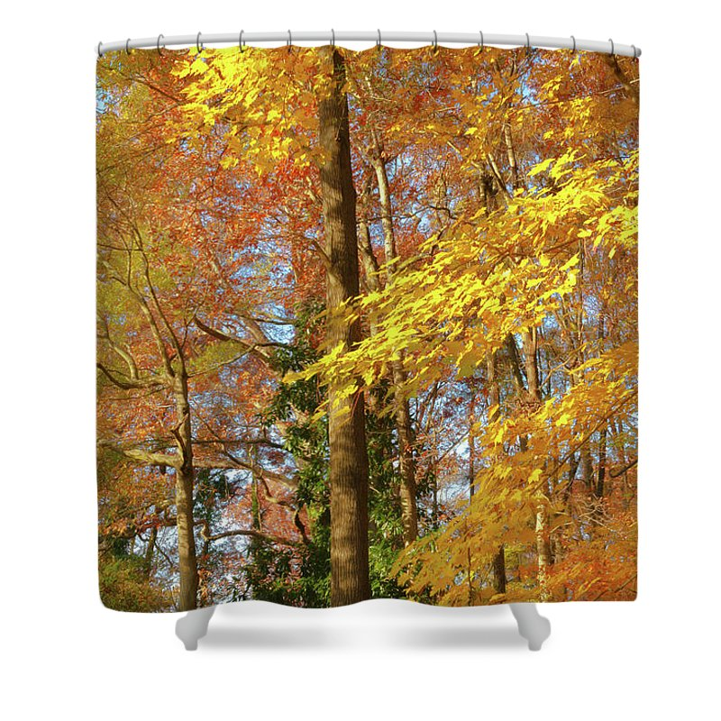 Autumn Gold Shower Curtain featuring the photograph Autumn Gold by Ola Allen