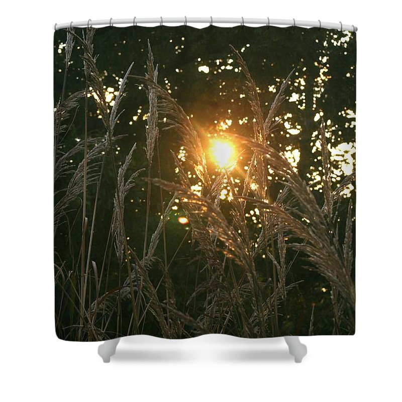 Light Shower Curtain featuring the photograph Autumn Grasses In The Morning by Nadine Rippelmeyer