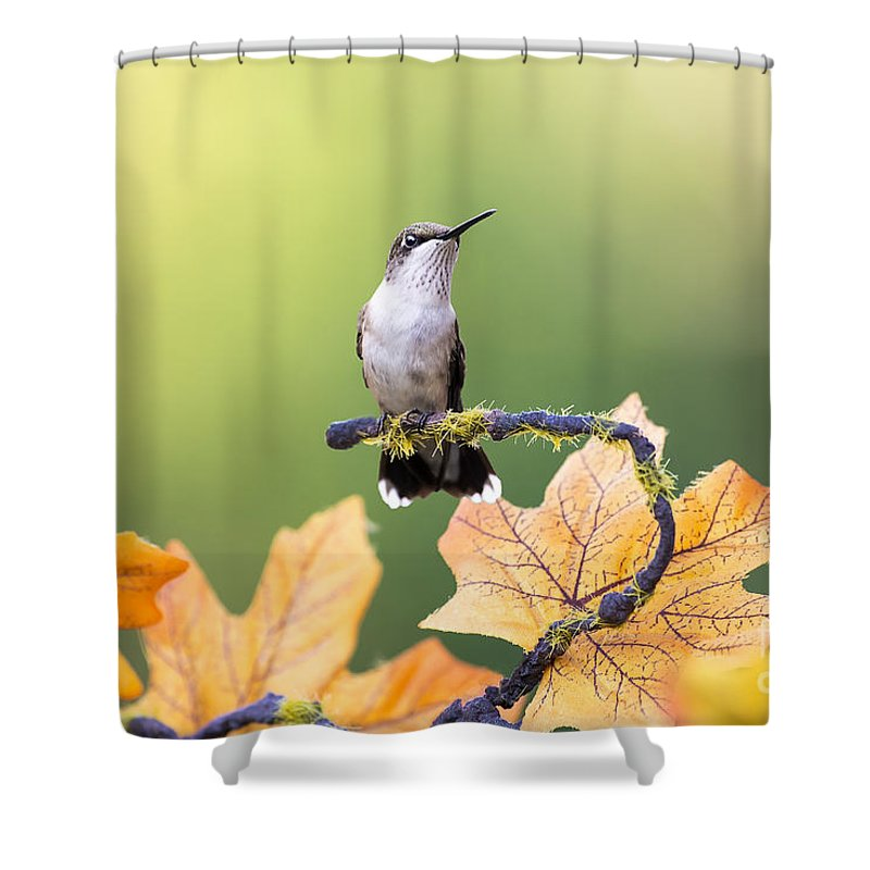 Hummingbird Shower Curtain Featuring The Photograph Autumn By Paul Danaher