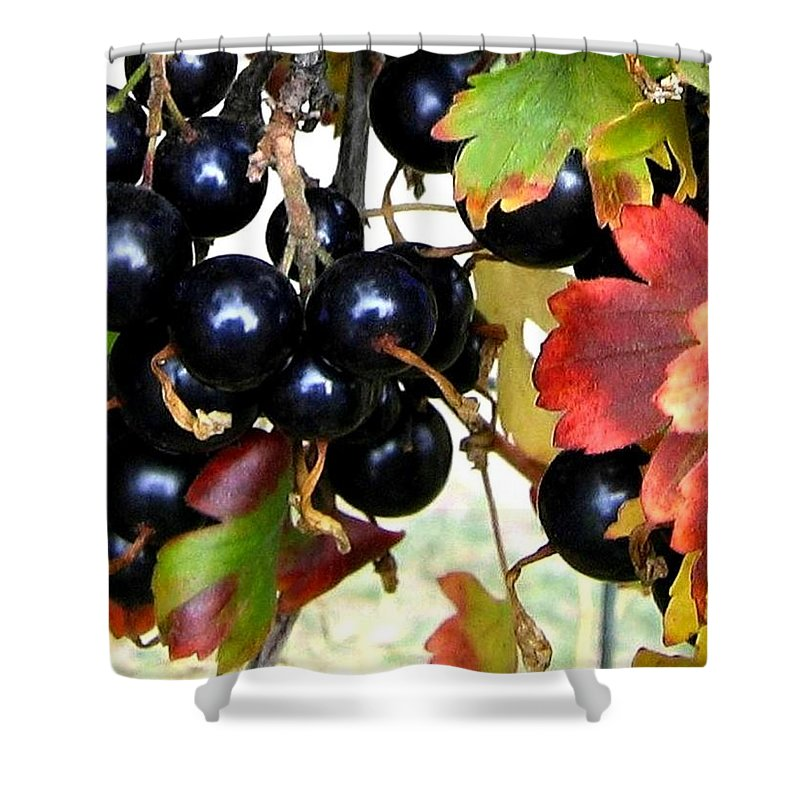 Autumn Shower Curtain featuring the photograph Autumn Jostaberries by Will Borden