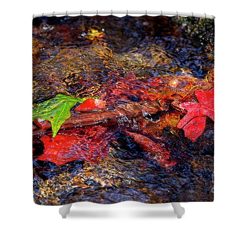 Autumn Leaves Shower Curtain featuring the photograph Autumn Leaves Abstract by Sharon Talson