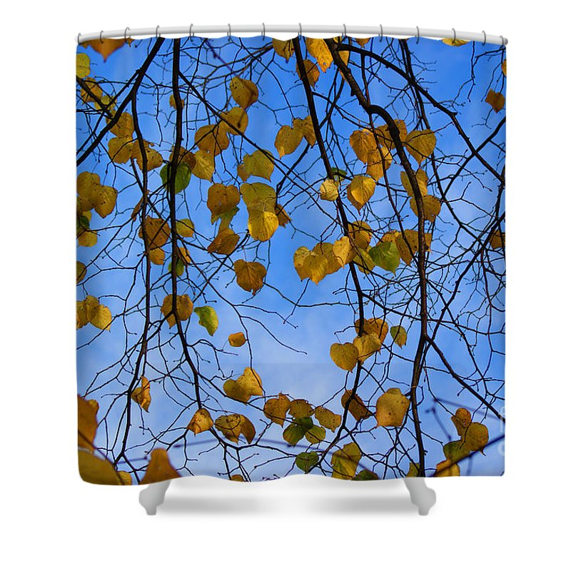 Autumn Shower Curtain featuring the photograph Autumn Leaves by Carol Lynch