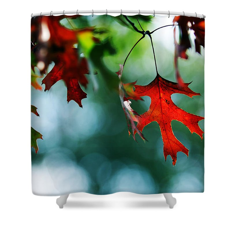 Autumn Fall Leaf Leaves Red Seasons Lone Nature Botanical Shower Curtain featuring the photograph Autumn Leaves by Jill Reger